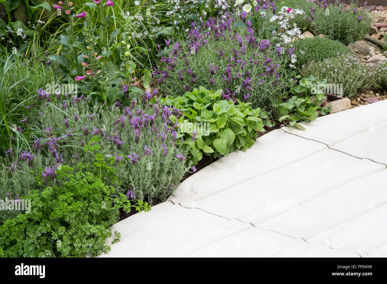Landscaping With Herbs : The evaders garden portland stone path lined with herbs parsley