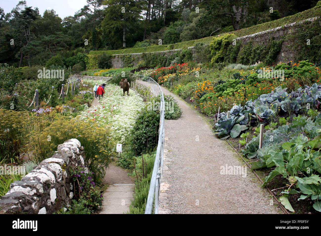 The Walled Garden At Inverewe Gardens, Wester Ross, Scotland