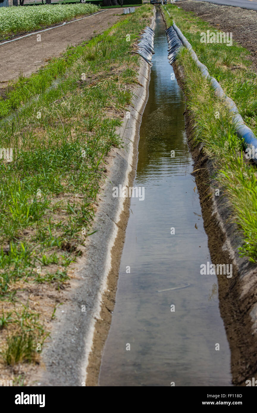 Agricultural Irrigation Canal : Irrigation canal with water flowing through to farm