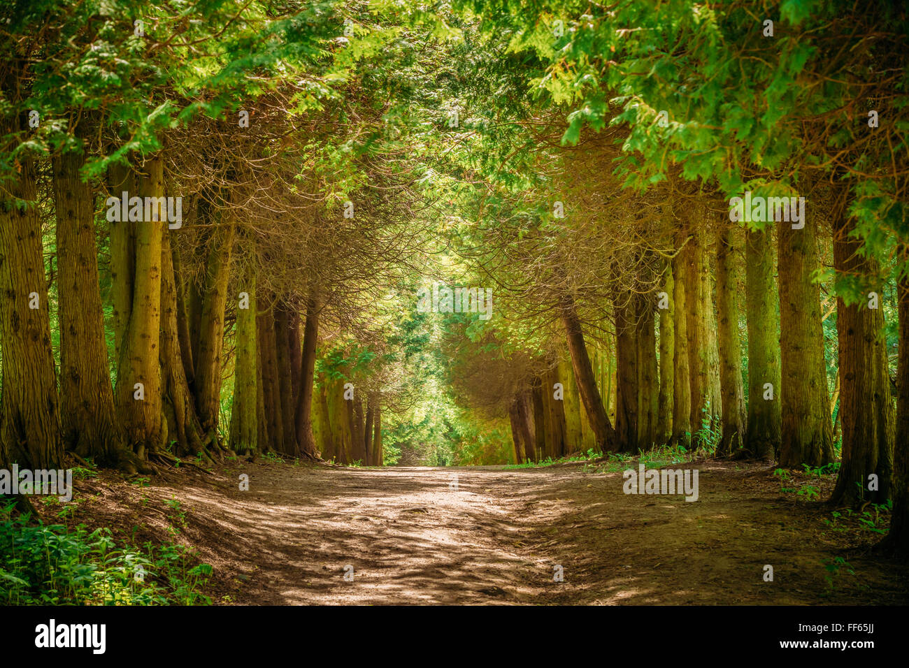 Walkway Lane Path With Green Trees In Forest Beautiful