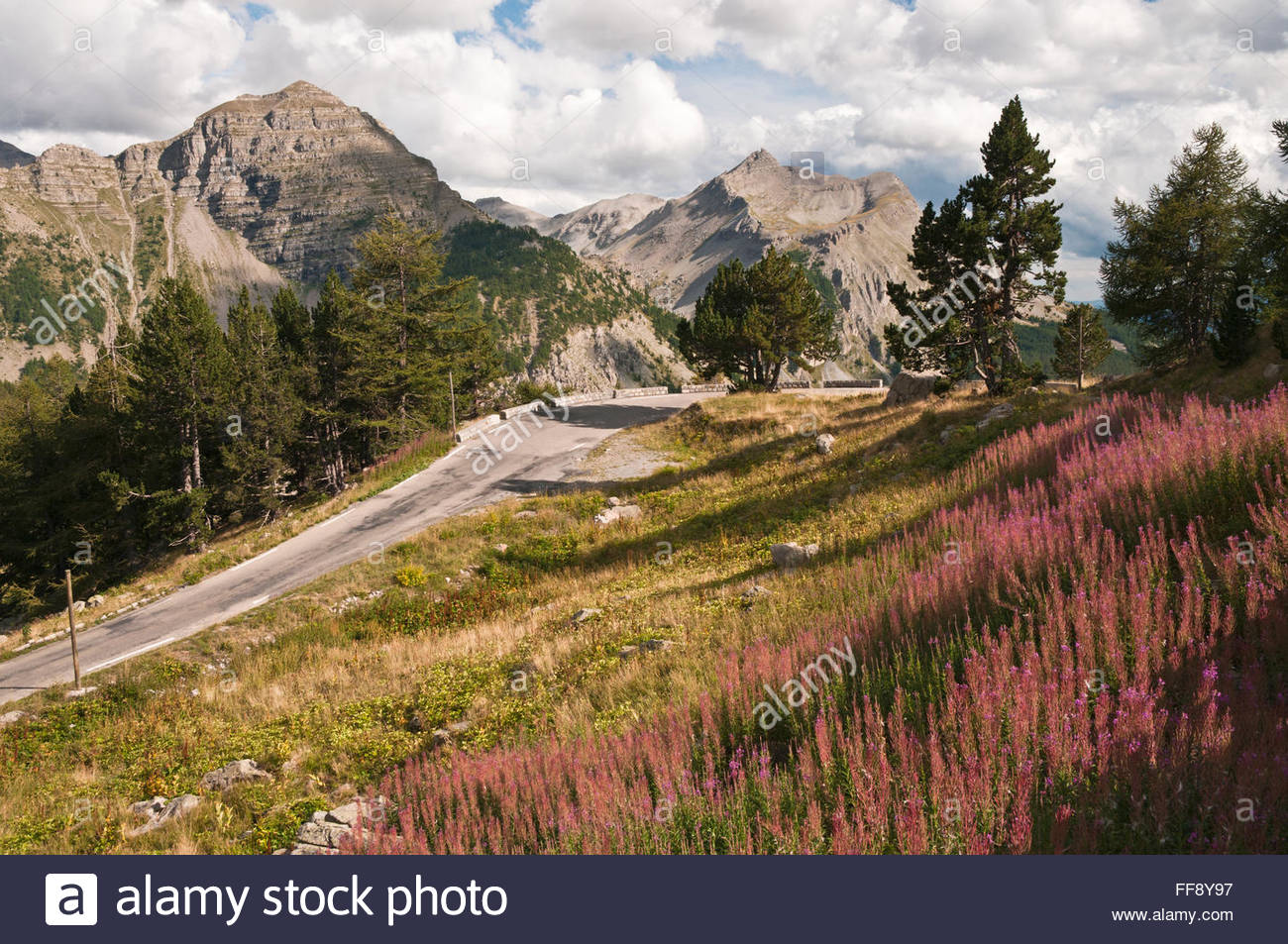 scenic road flower essay Pinpointing all of the most beautiful places in the world could take a lifetime,  fury road getty cliffs of moher  scenic might be an understatement in this case.