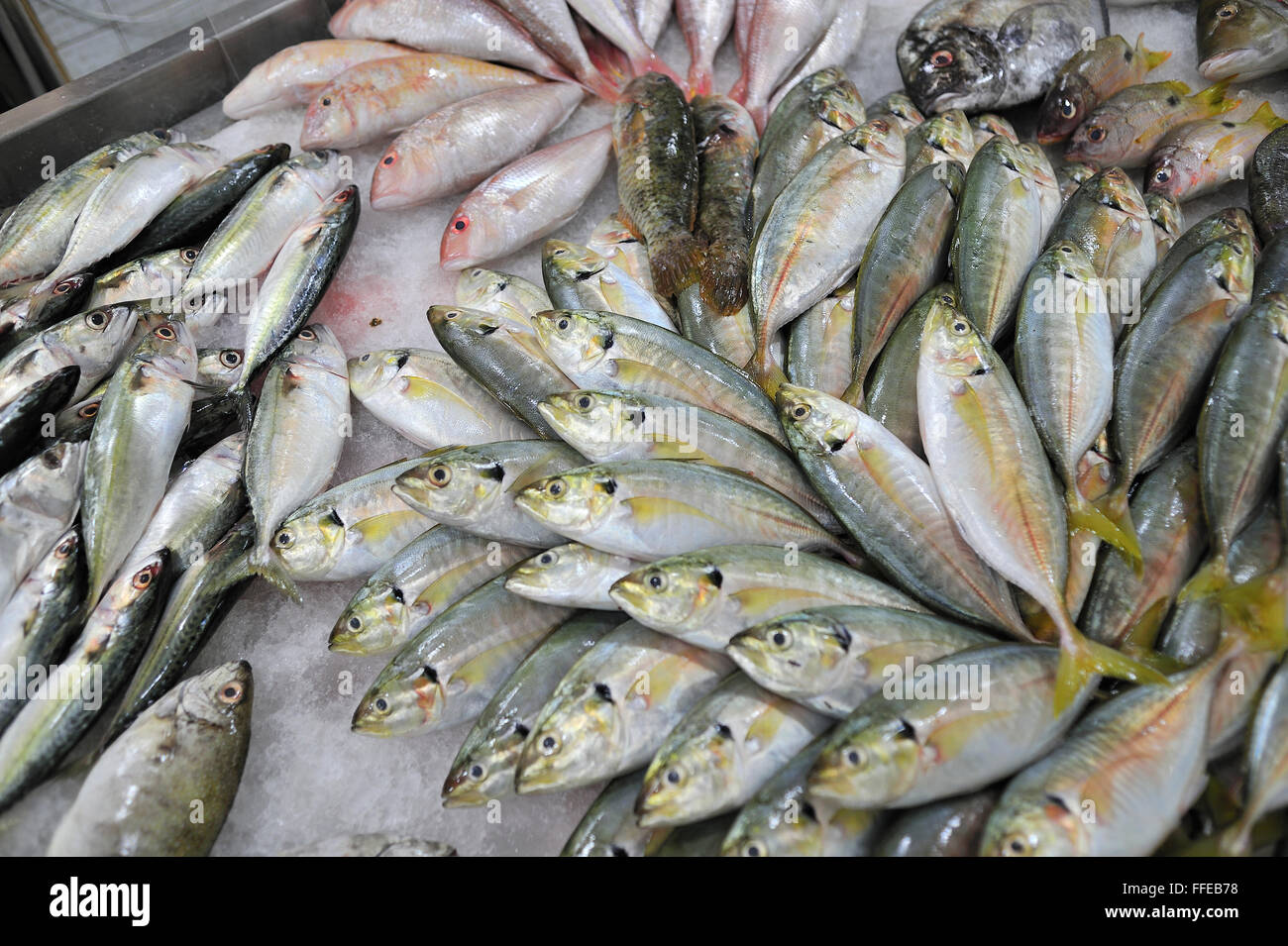 Fresh fish for sale in metro gaisano supermarket ayala for Stock fish for sale