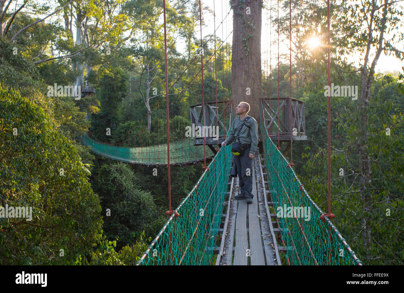 Tourists on a canopy walkway in the Danum Valley Sabah Malaysia & Tourists on a canopy walkway in the Danum Valley Sabah Malaysia ...