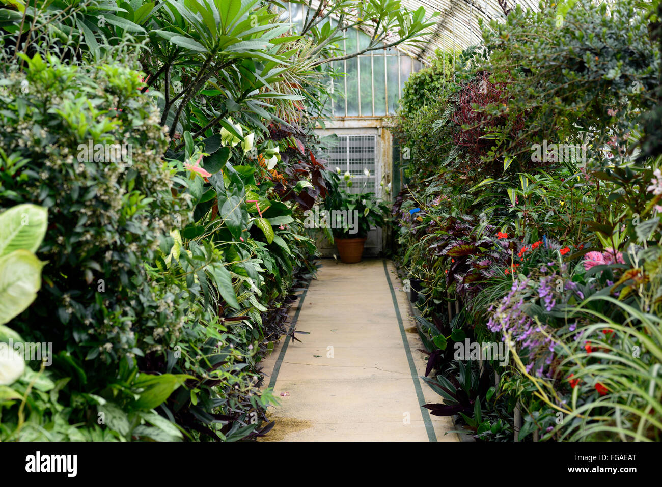belfast botanical gardens palm house glass house tropical plan