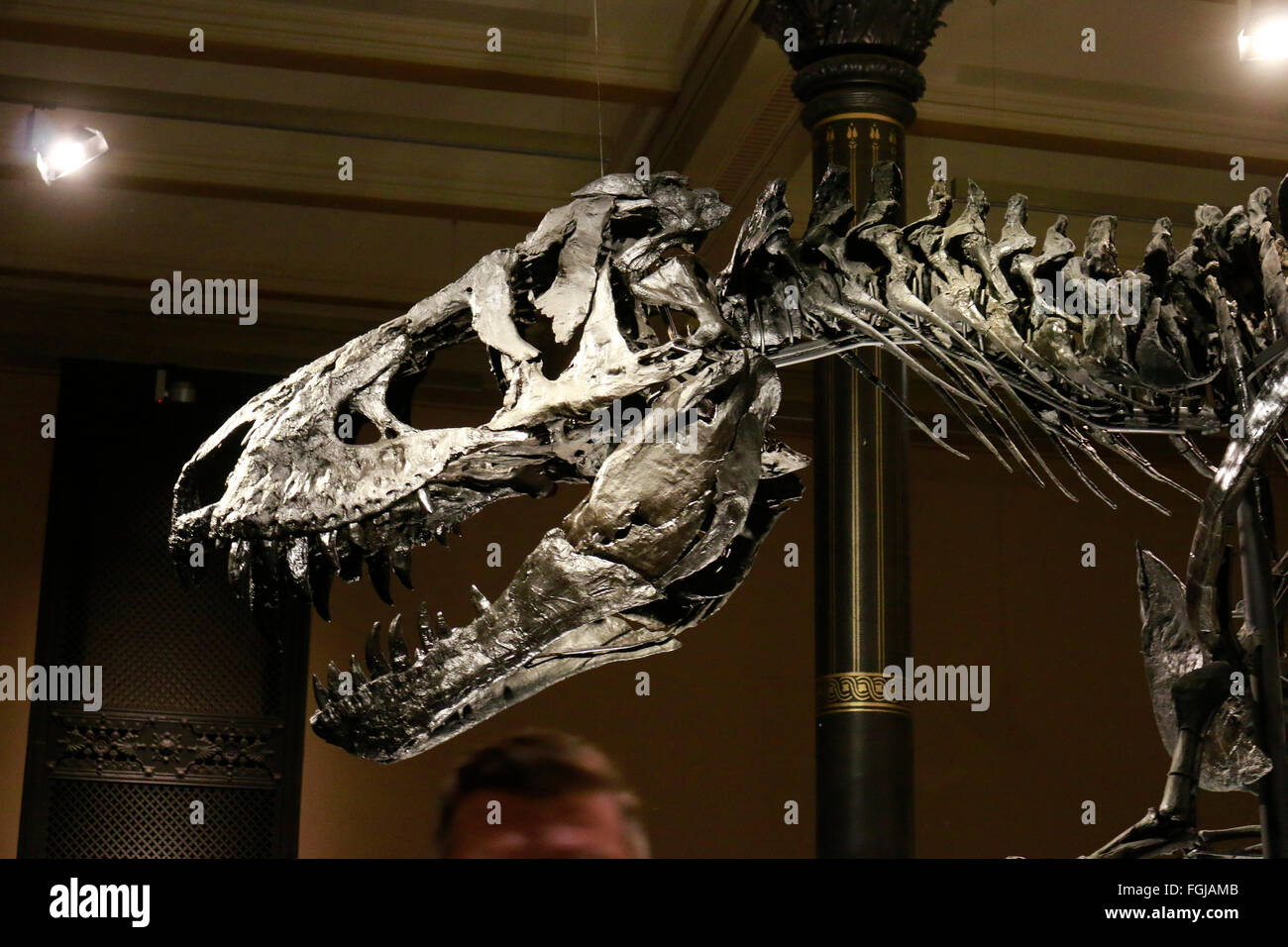 Saurus stock photos saurus stock images alamy das skelett des tyrannus saurus rex tristan otto naturhistorisches museum berlin thecheapjerseys Image collections