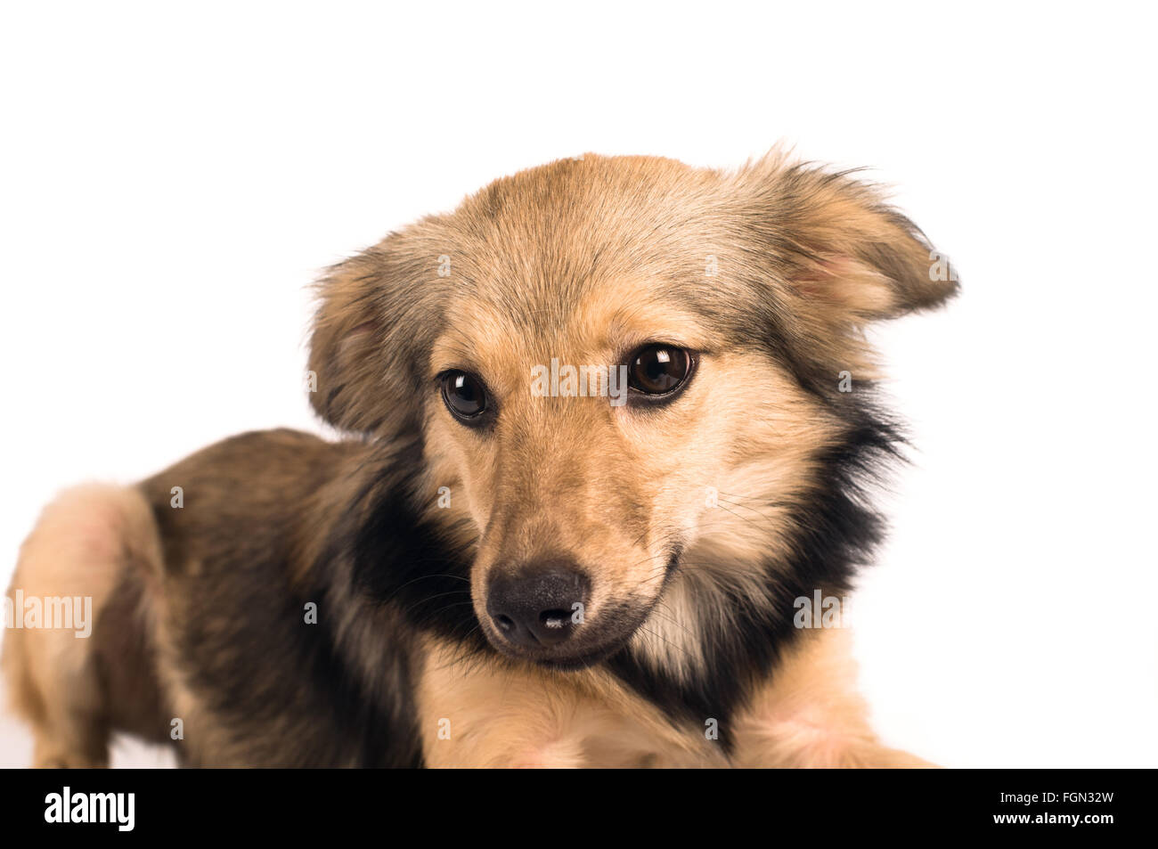 20 Irresistibly Cute Photos of Mixed Breed Dogs