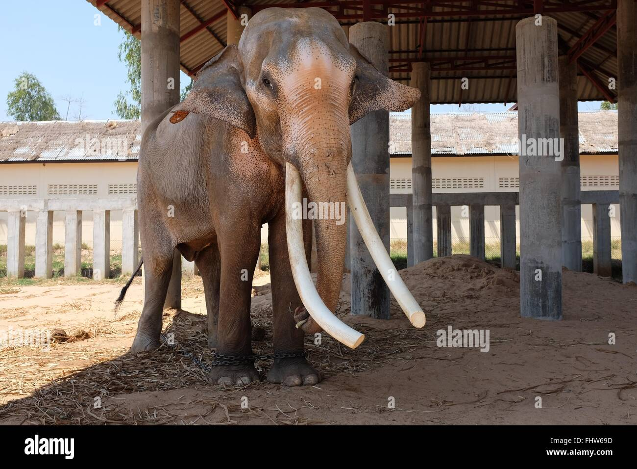 What is a male elephant called?