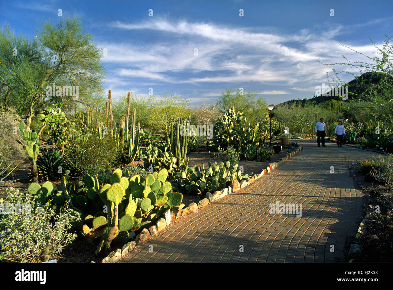 The DESERT BOTANICAL GARDEN In PHOENIX ARIZONA Has The Largest Collection  Of Desert Plants In The US