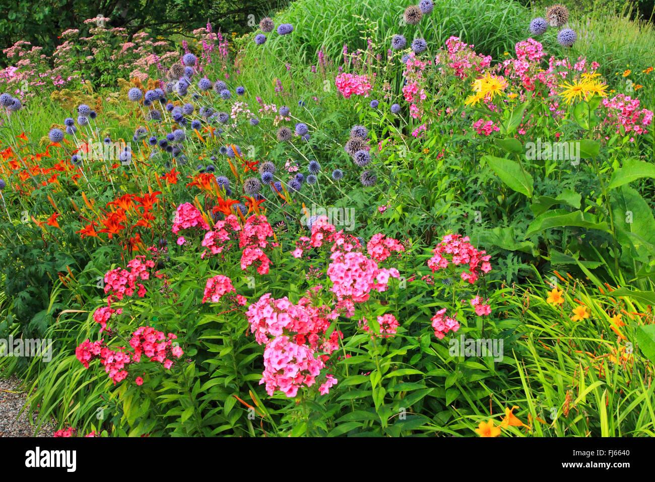 Garden Phlox Phlox Paniculata Stock Photos Garden Phlox Phlox