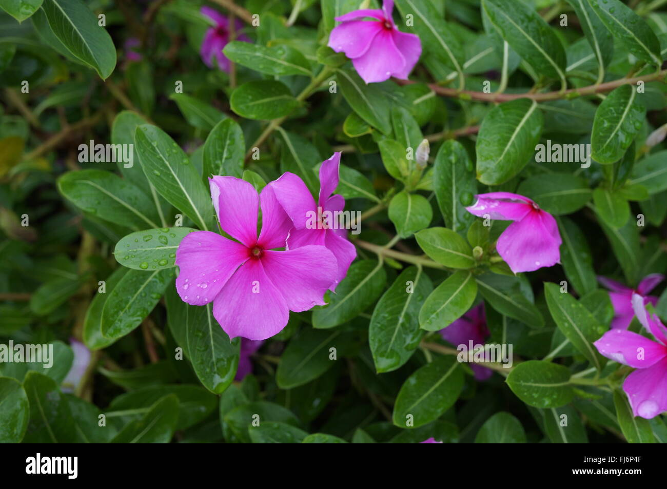 Flowers that bloom in shade - Pink Impatiens Flowers In Bloom In The Shade