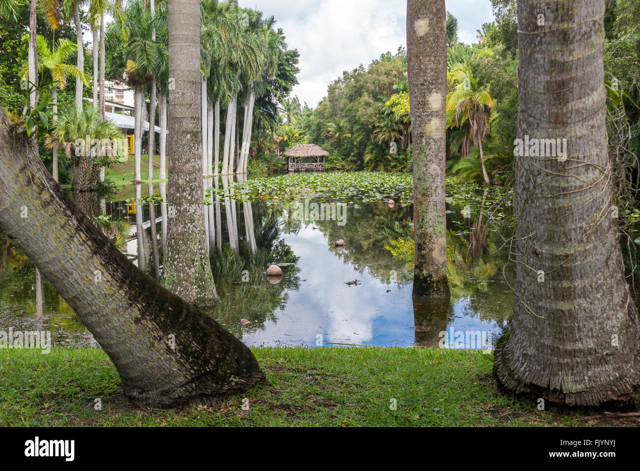 Bonnet House slough in gardens of museum estate in Fort Lauderdale ...