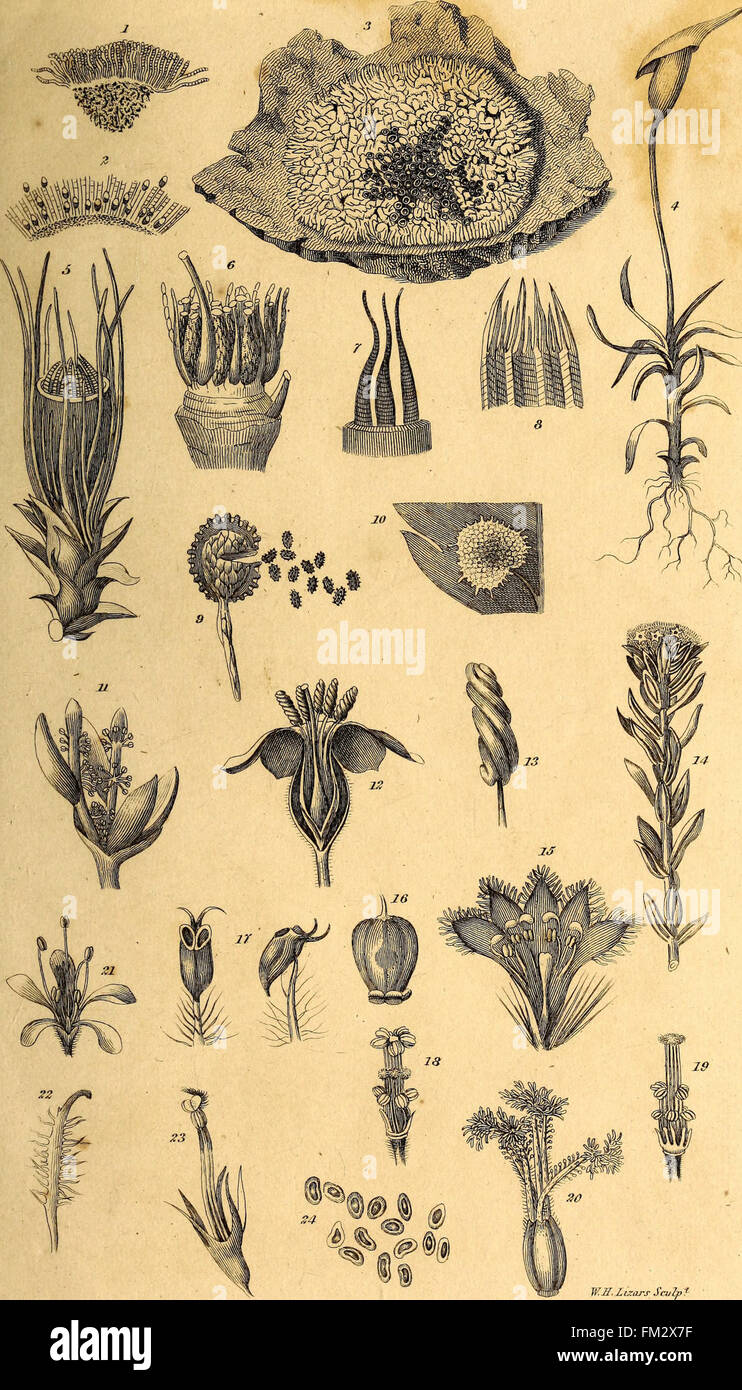 Elements of the philosophy of plants - containing the principles of ...