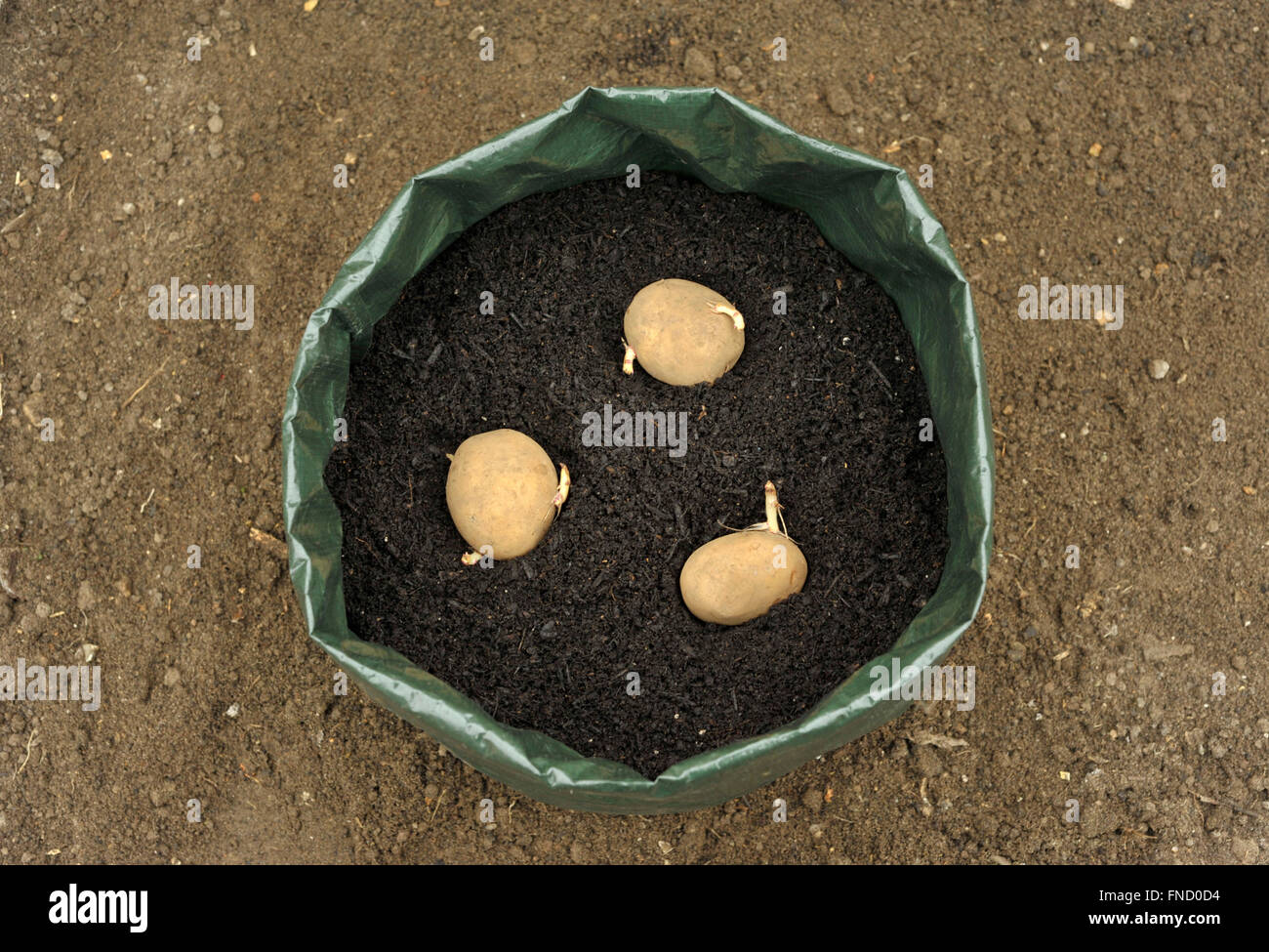 planting seed potatoes Part - 16:  planting seed potatoes pictures gallery