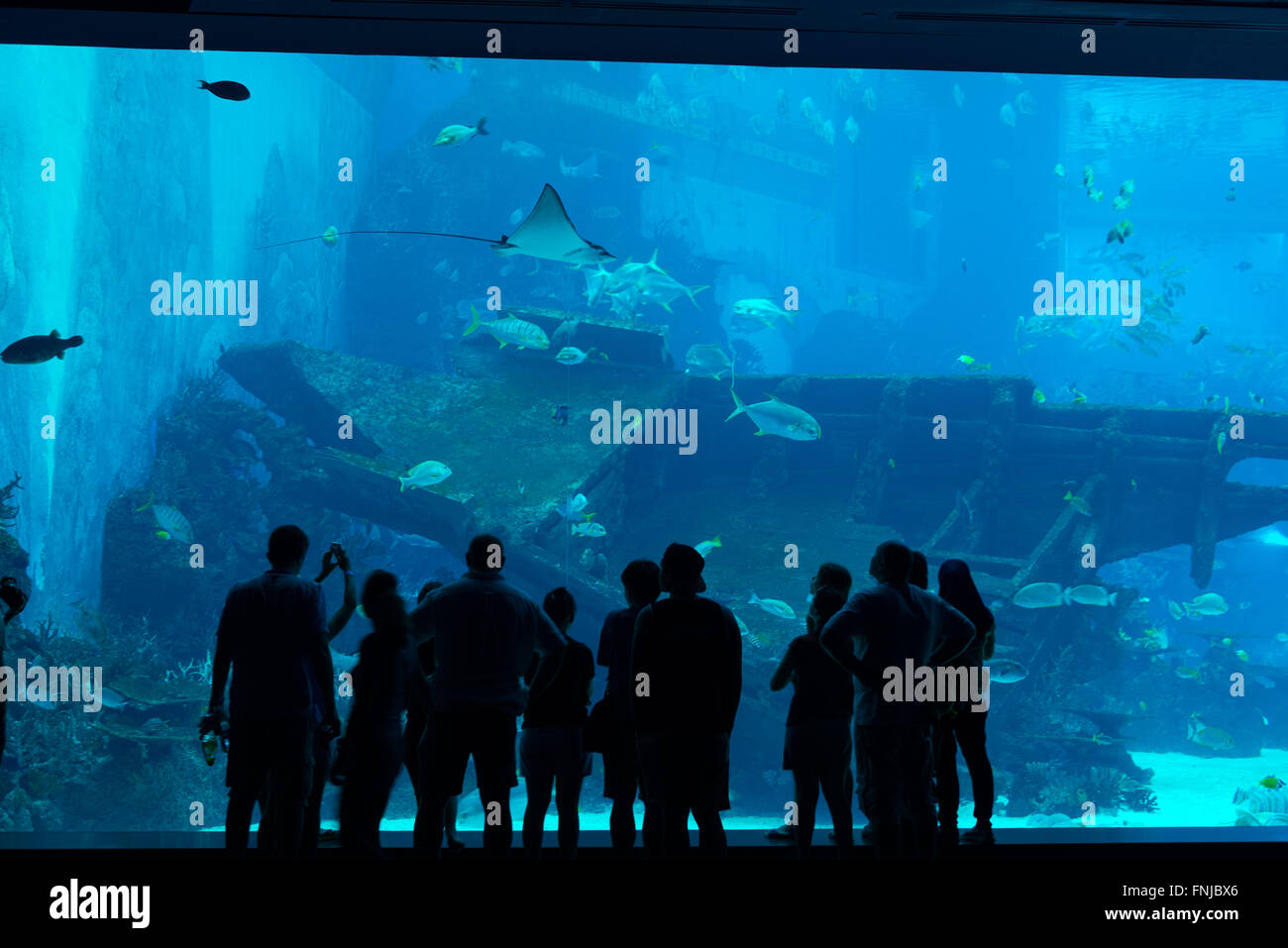 Fish aquarium in sentosa - Silhouette Of People In Front Of Huge Aquarium With Stingray And Fishes On Sentosa Island Singapore
