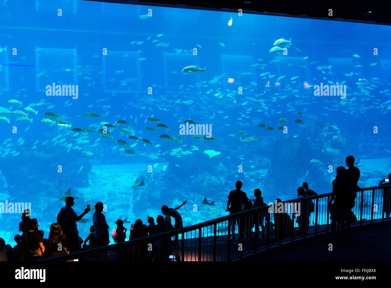 Fish aquarium in sentosa - School Of Fish In Panoramic Marine Panel At Aquarium Sentosa Singapore