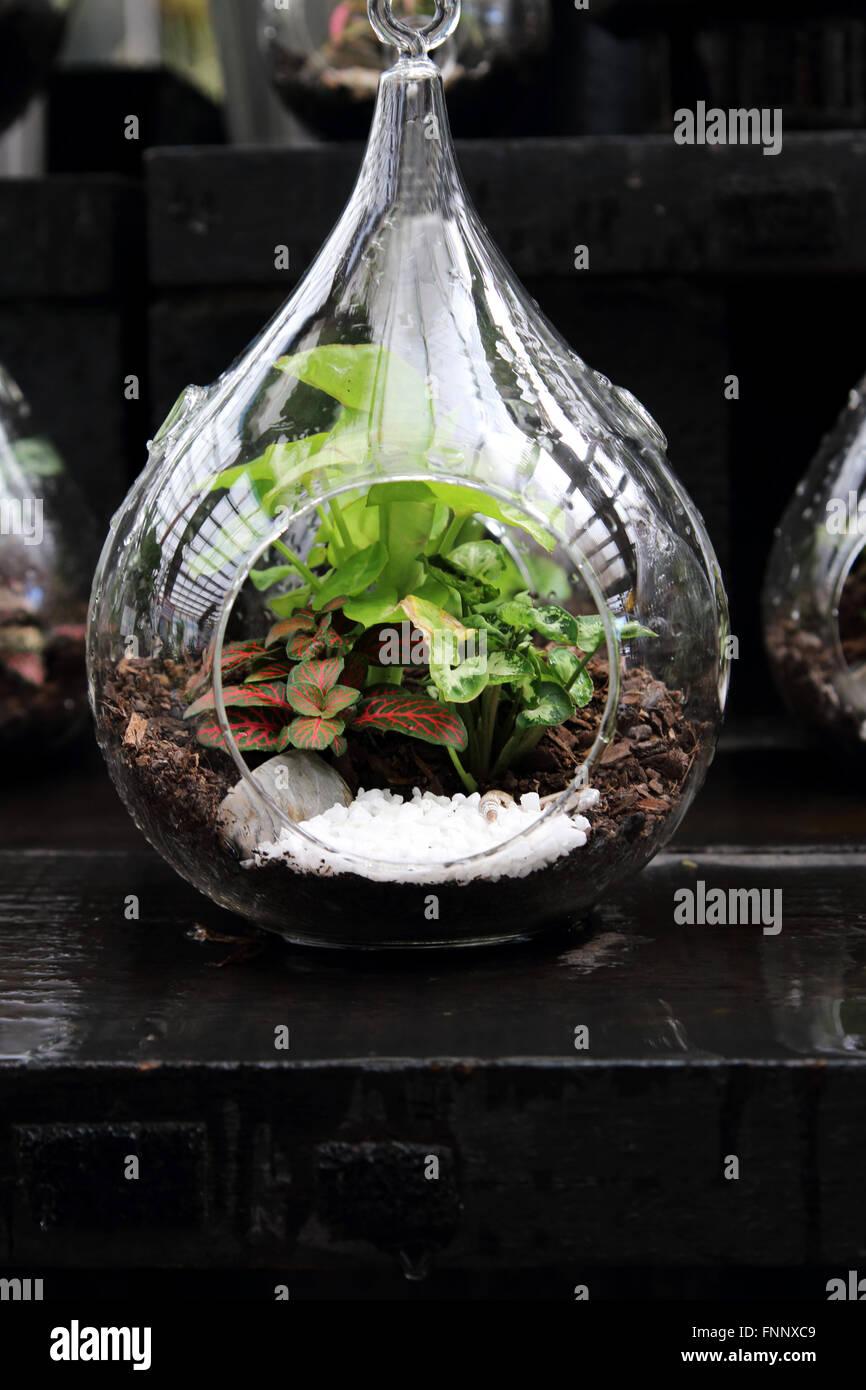 Terrariums with plants inside glass jar