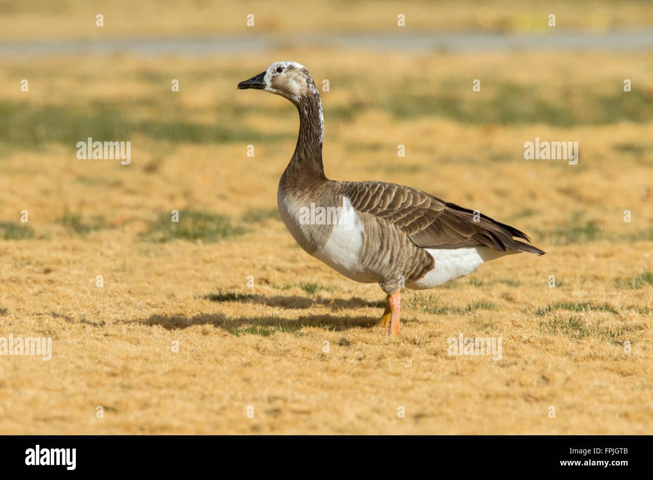 canada goose shop las vegas