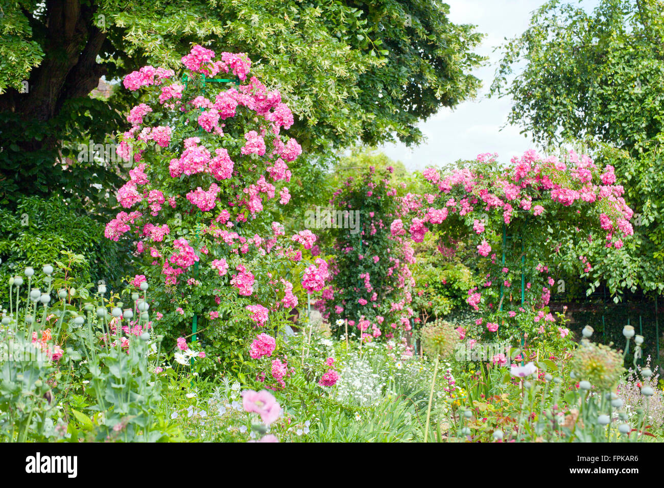 garden of the painter claude monet rose bush roses stock photo royalty free image 99999850. Black Bedroom Furniture Sets. Home Design Ideas