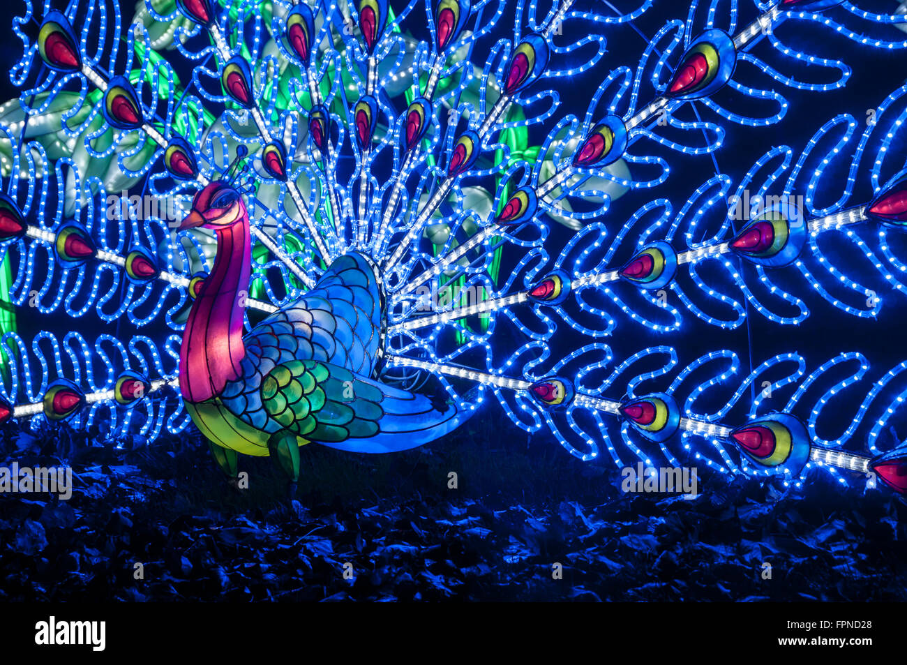 The illuminated peacock lights display christmas xmas for 57in led lighted peacock outdoor christmas decoration