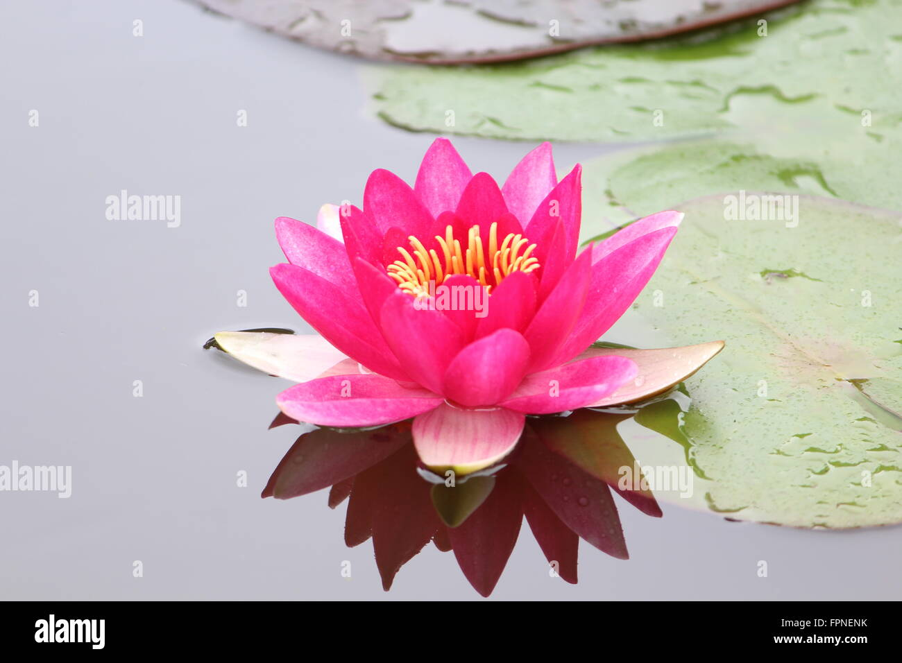 Indian Flower Names With Images Flower Names For Children You