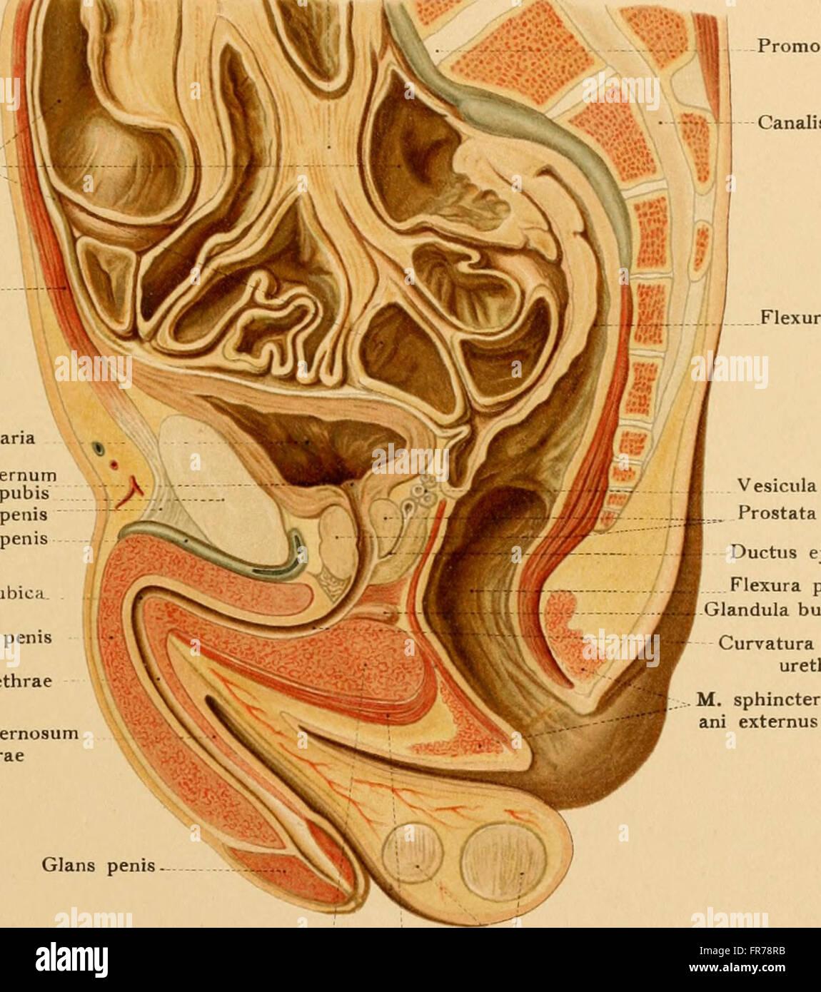 Ungewöhnlich Barrons Anatomie Und Physiologie Ideen - Menschliche ...