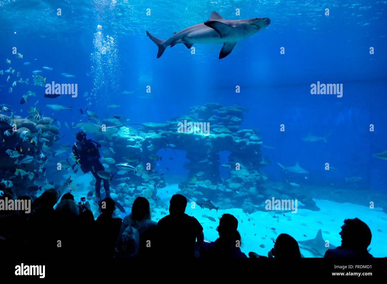 shark pool stock photos shark pool stock images alamy  ors in the shark pool of coral world underwater observatory aquarium located in the city of