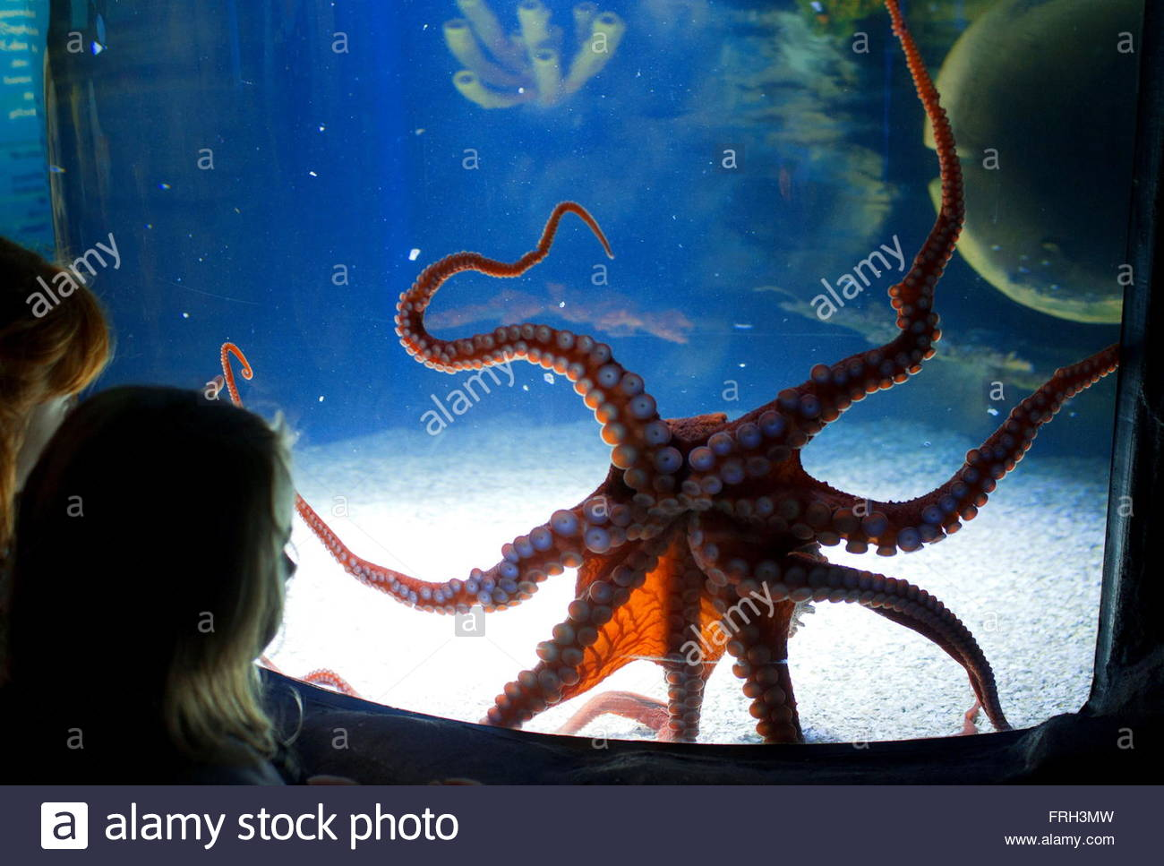 Related keywords suggestions for octopus aquarium for Octopus fish tank