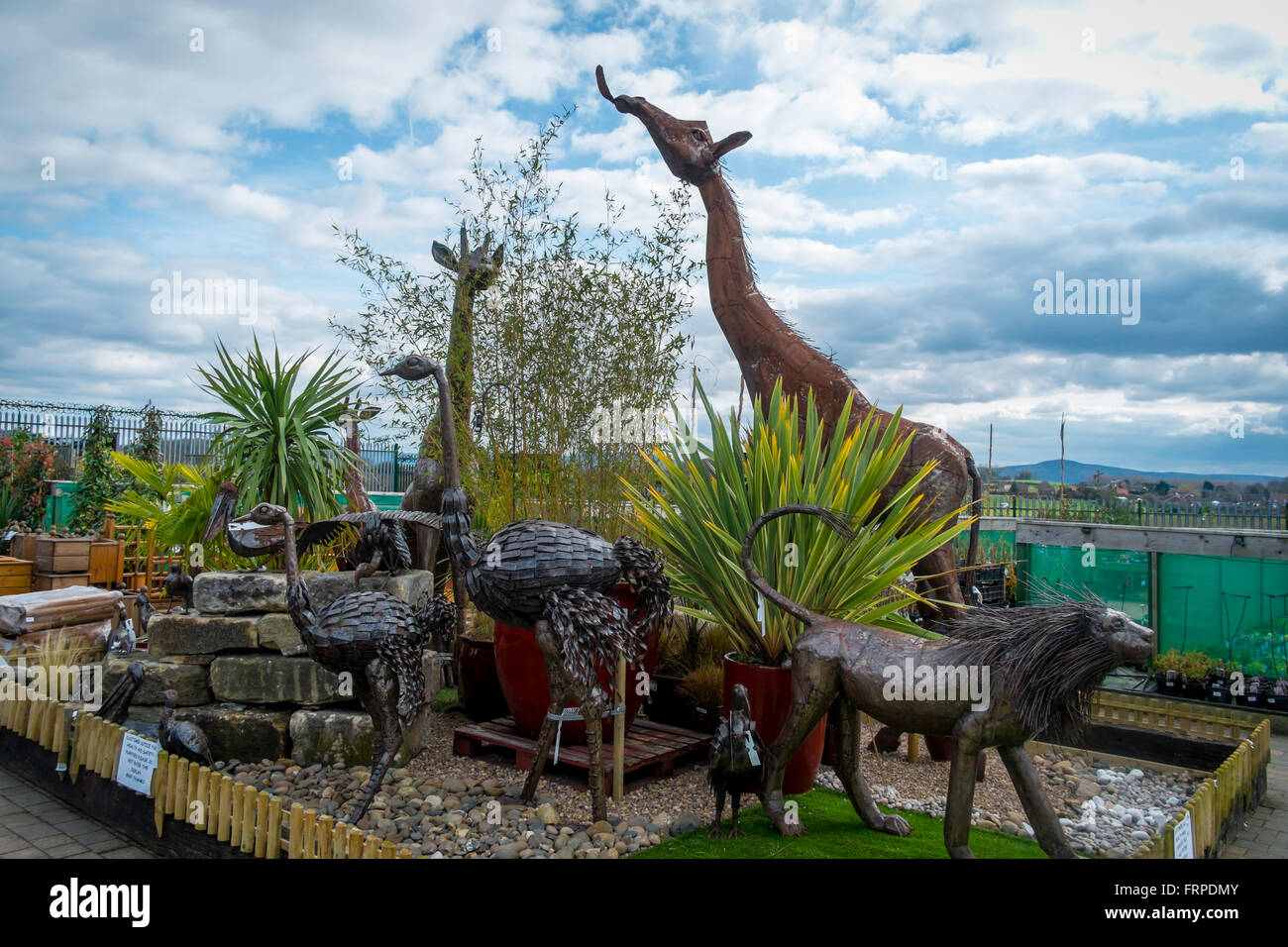 A Collection Of Garden Ornaments Large Steel Giraffes Lions And Ostriches  Statues In A Suburban Garden