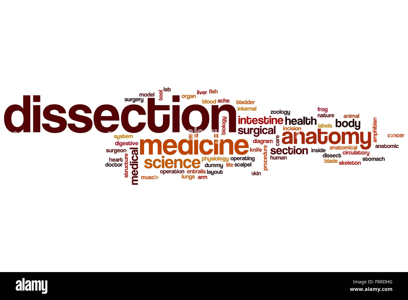 Dissection word cloud concept Stock Photo: 100704508 - Alamy