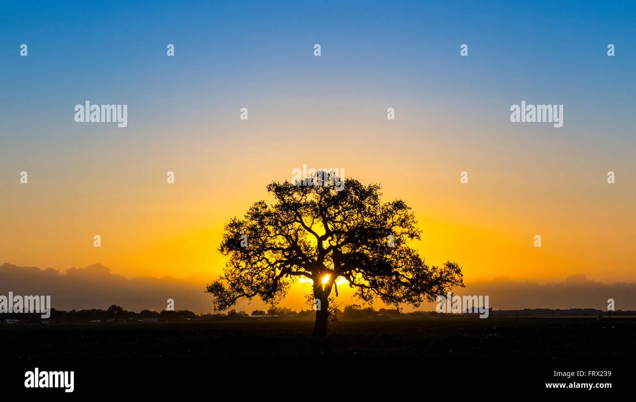 a-beautiful-sunrise-in-the-california-ce
