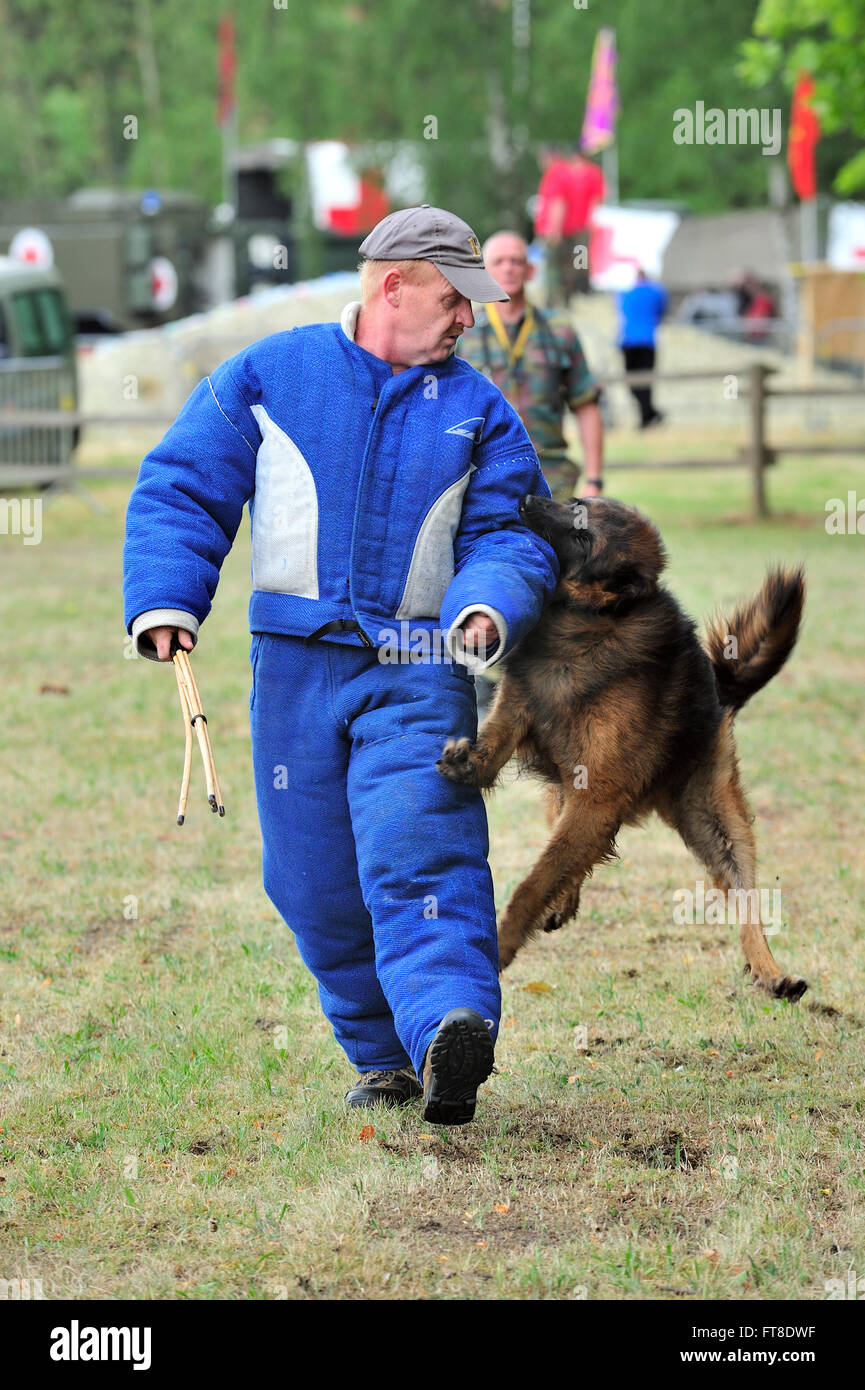Protection Dog Training Video Download