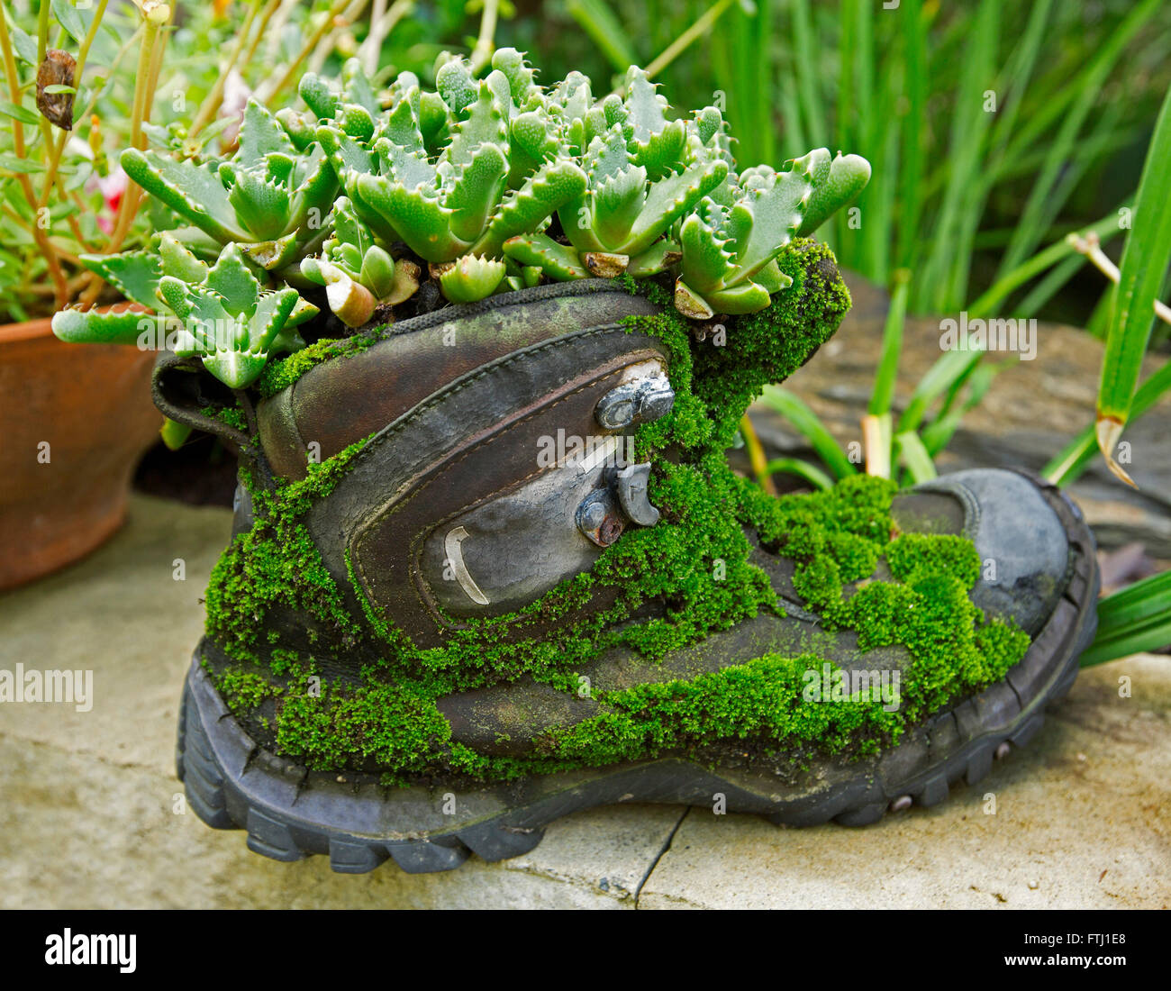 Unusual Plant Container Old Leather Boot Covered With