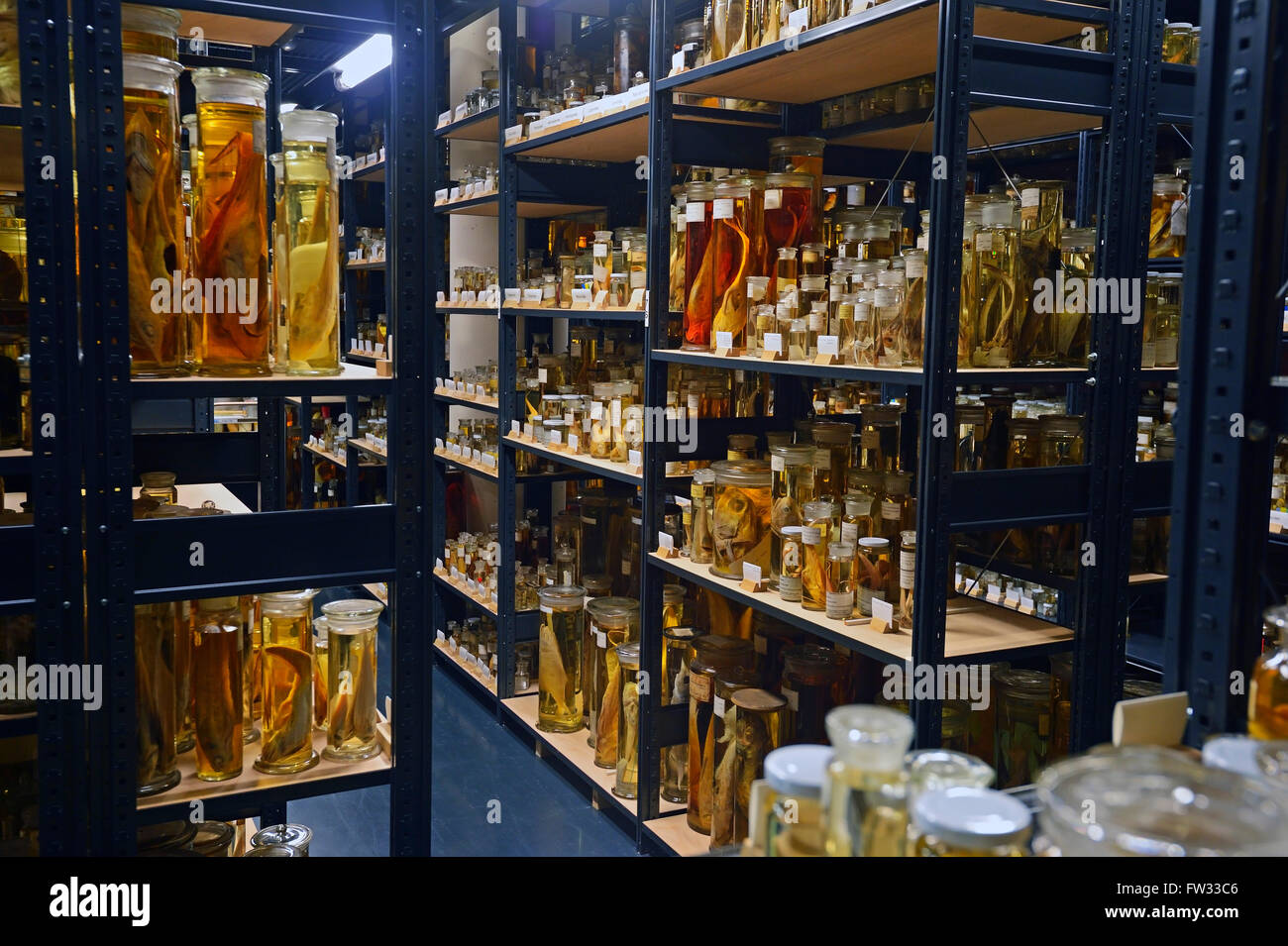Alcohol Cabinet Glass Cabinet With Alcohol Preserved Animal Specimens Exhibits In