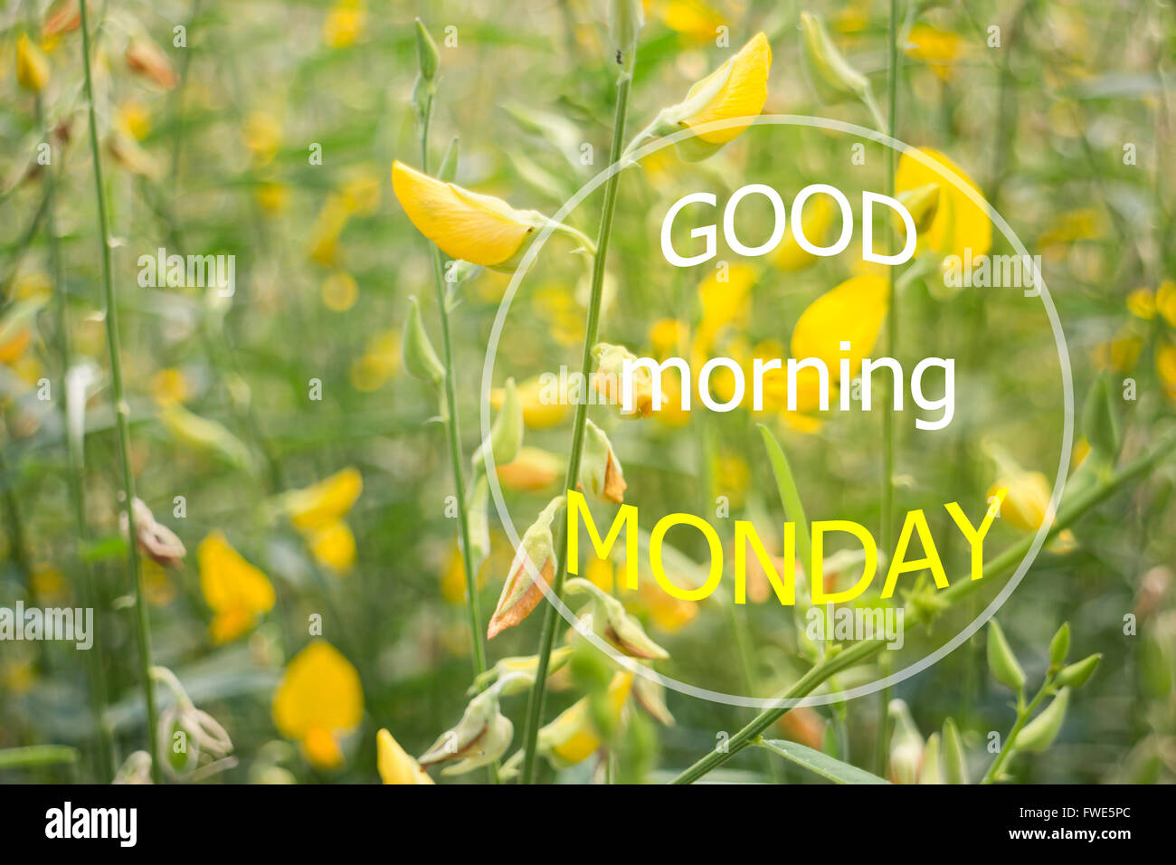 Good Morning Monday Quotes Good Morning Monday Quote Design Poster Stock Photo Stock Photo
