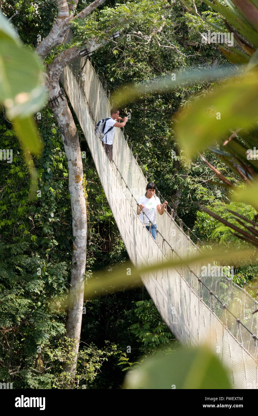 Visitors have a birds eye view from the Amazon jungle canopy walkway at river napo c& Explorama tours in Peru. Iquitos Loreto & Visitors have a birds eye view from the Amazon jungle canopy ...