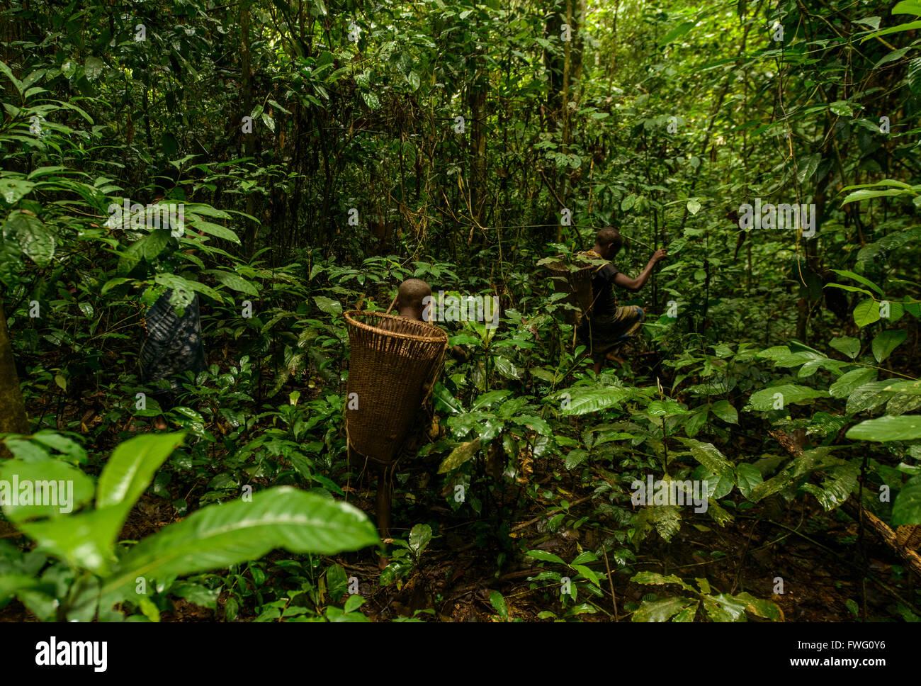 Home  Rainforest Foundation UK