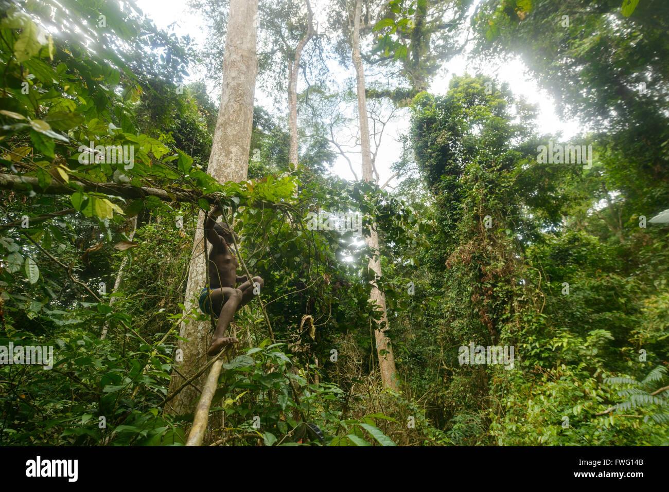 African Rainforest