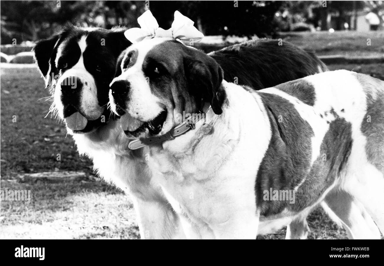 beethoven film stock photos beethoven film stock images alamy beethoven s 2nd aka eine familie ns beethoven usa 1993 regie rod