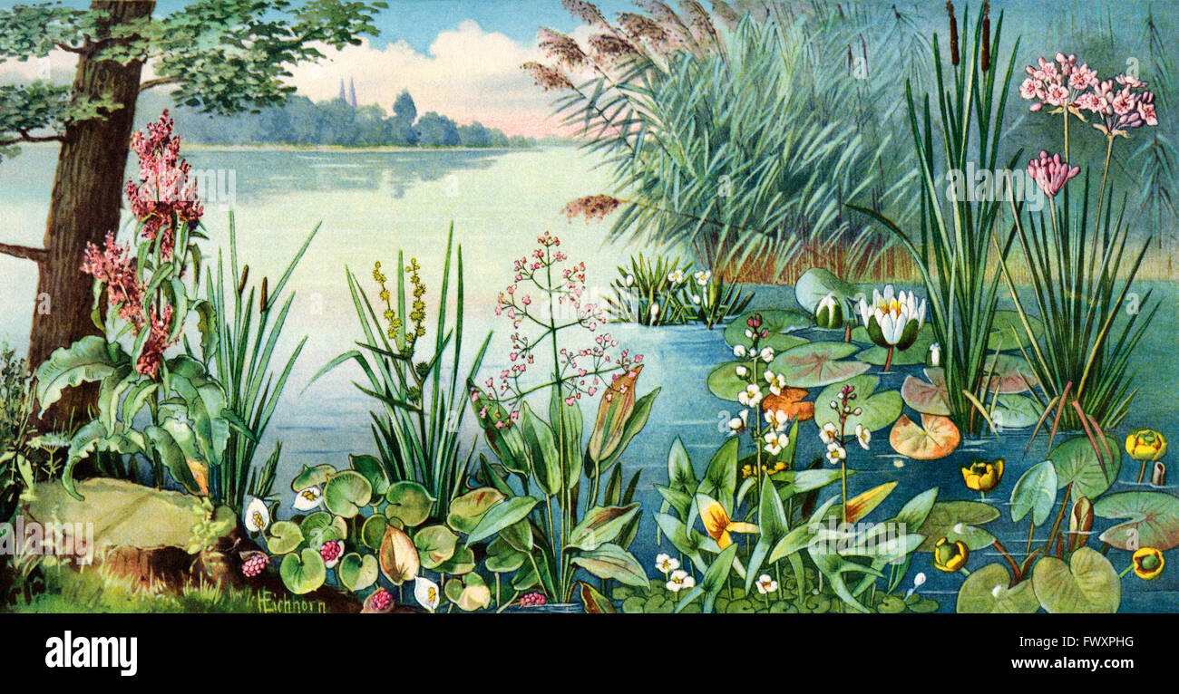 Different types of water plants stock photo royalty free for Different type of water