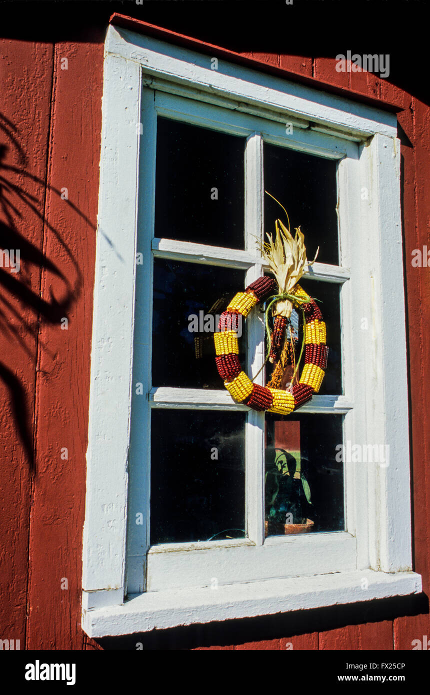 autumn decorations of colorful indian corn wreath on a red garden shed window new jersey usa america united states