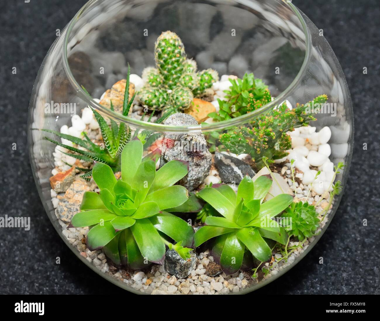 Table top indoor decorative miniature garden in clear glass bubble table top indoor decorative miniature garden in clear glass bubble with cactuses and succulents decorative glass vase with succ reviewsmspy