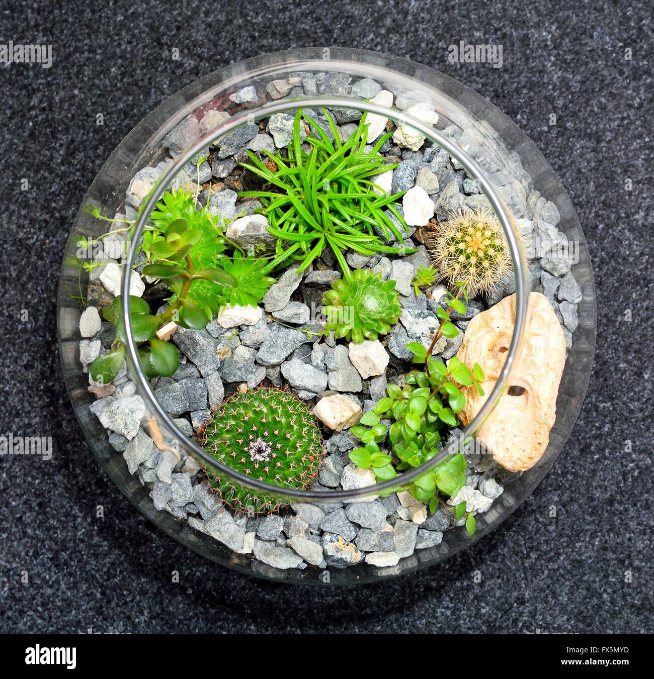 Table top indoor decorative miniature garden in clear glass bubble ...