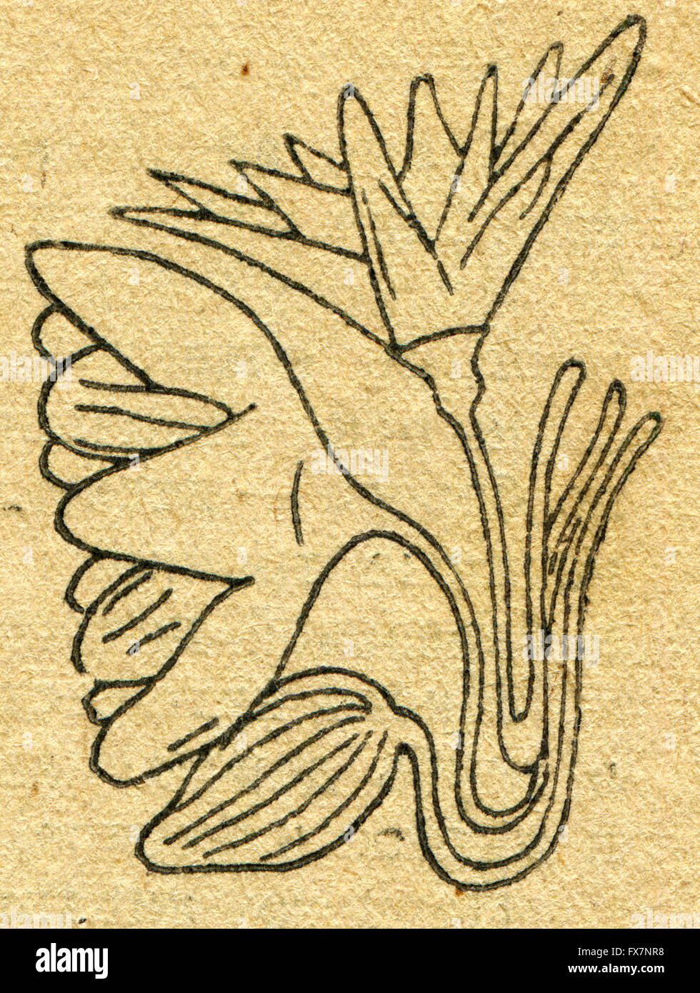 image of a lotus flower in egyptian tomb  an illustration from, Beautiful flower