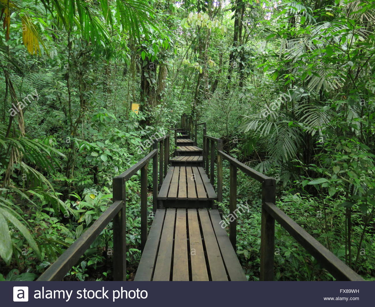 wooden bridge in the jungle stock photo 102216285 alamy. Black Bedroom Furniture Sets. Home Design Ideas