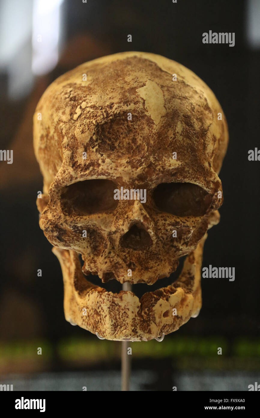 a look at cro magnons views on human functions Geneticists decode the european the great apes, look more like a human hand with a thumb-like hallux that sticks to 30,000 bce with the cro-magnons.