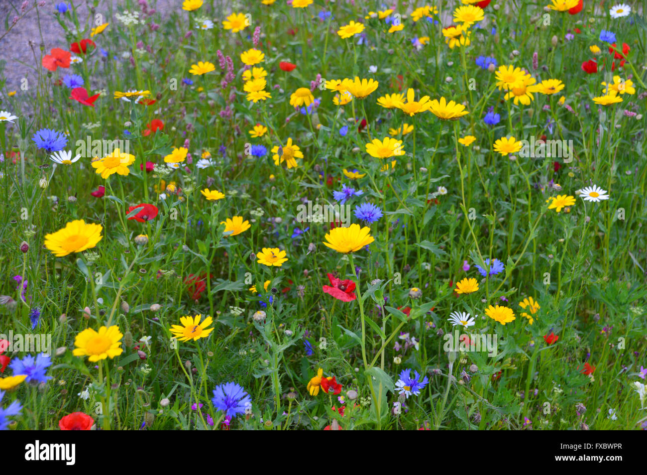 Gorgeous Close Up Of A Colourful Mixed Wild Flower Meadow At Rhs Garden  With Marvelous Close Up Of A Colourful Mixed Wild Flower Meadow At Rhs Garden Harlow Carr  Harrogate Yorkshire Uk With Astounding Shade Garden Ideas Also Island Gardens Station In Addition Gardens Florence Italy And Garden Decorations As Well As Lee Gardens Office Plus Additionally How To Build A Garden Pond From Alamycom With   Marvelous Close Up Of A Colourful Mixed Wild Flower Meadow At Rhs Garden  With Astounding Close Up Of A Colourful Mixed Wild Flower Meadow At Rhs Garden Harlow Carr  Harrogate Yorkshire Uk And Gorgeous Shade Garden Ideas Also Island Gardens Station In Addition Gardens Florence Italy From Alamycom
