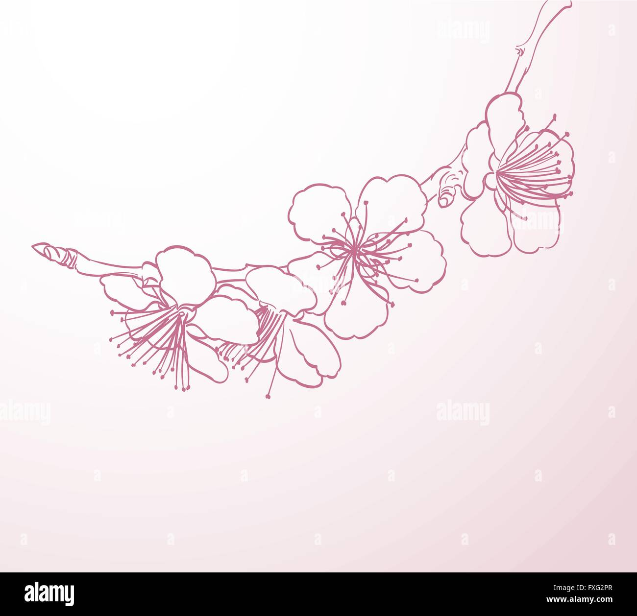 Pink Flower Line Drawing : Blossoming tree flowers line art hand drawing spring