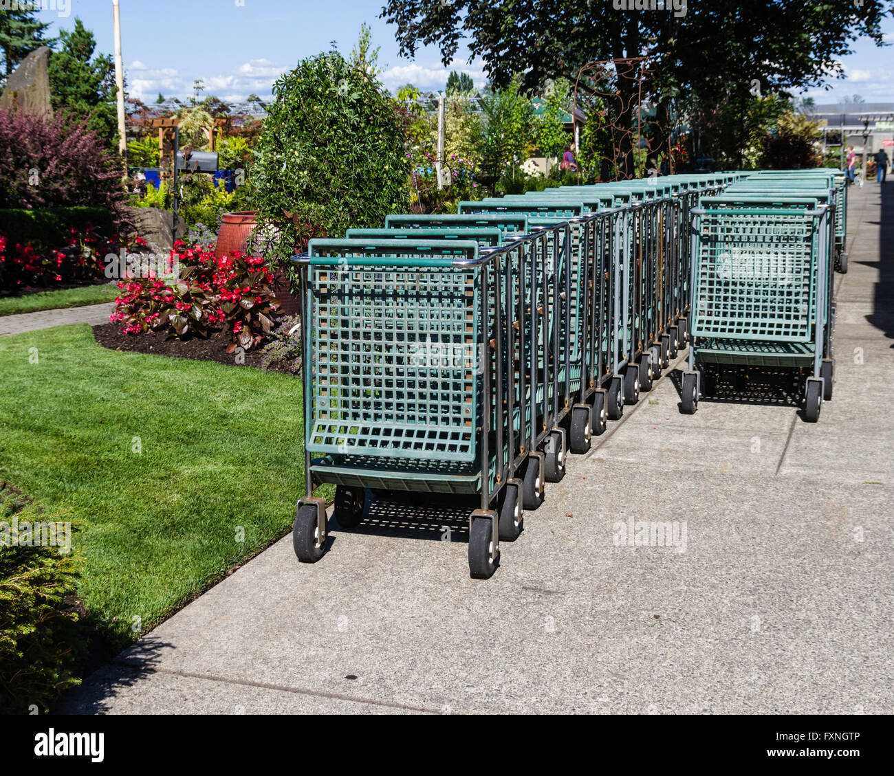 Group Of Shopping Carts Or