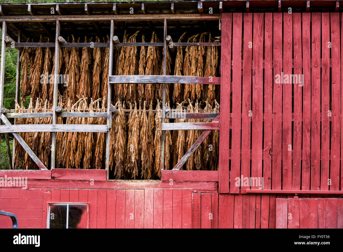 An old tobacco drying barn to air cure burley tobacco in prices an old tobacco drying barn to air cure burley tobacco in prices creek north carolina tobacco growing is no longer economically viable in western north sciox Image collections