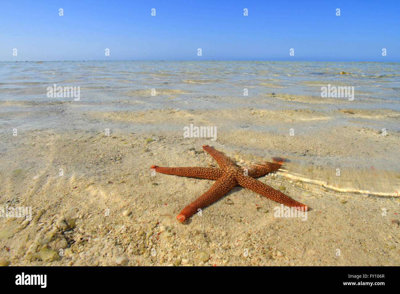 Starfish And Rock Formations Along Indian Beach Oregon Coast Stock